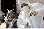خرید واکسن به ارزش ۲ میلیارد ریال جهت جلوگیری از بیماری های دامی در منطقه